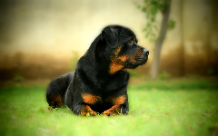 Cute Dogs New Tab Theme HD Wallpapers 9