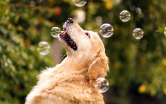 Cute Dogs New Tab Theme HD Wallpapers 31