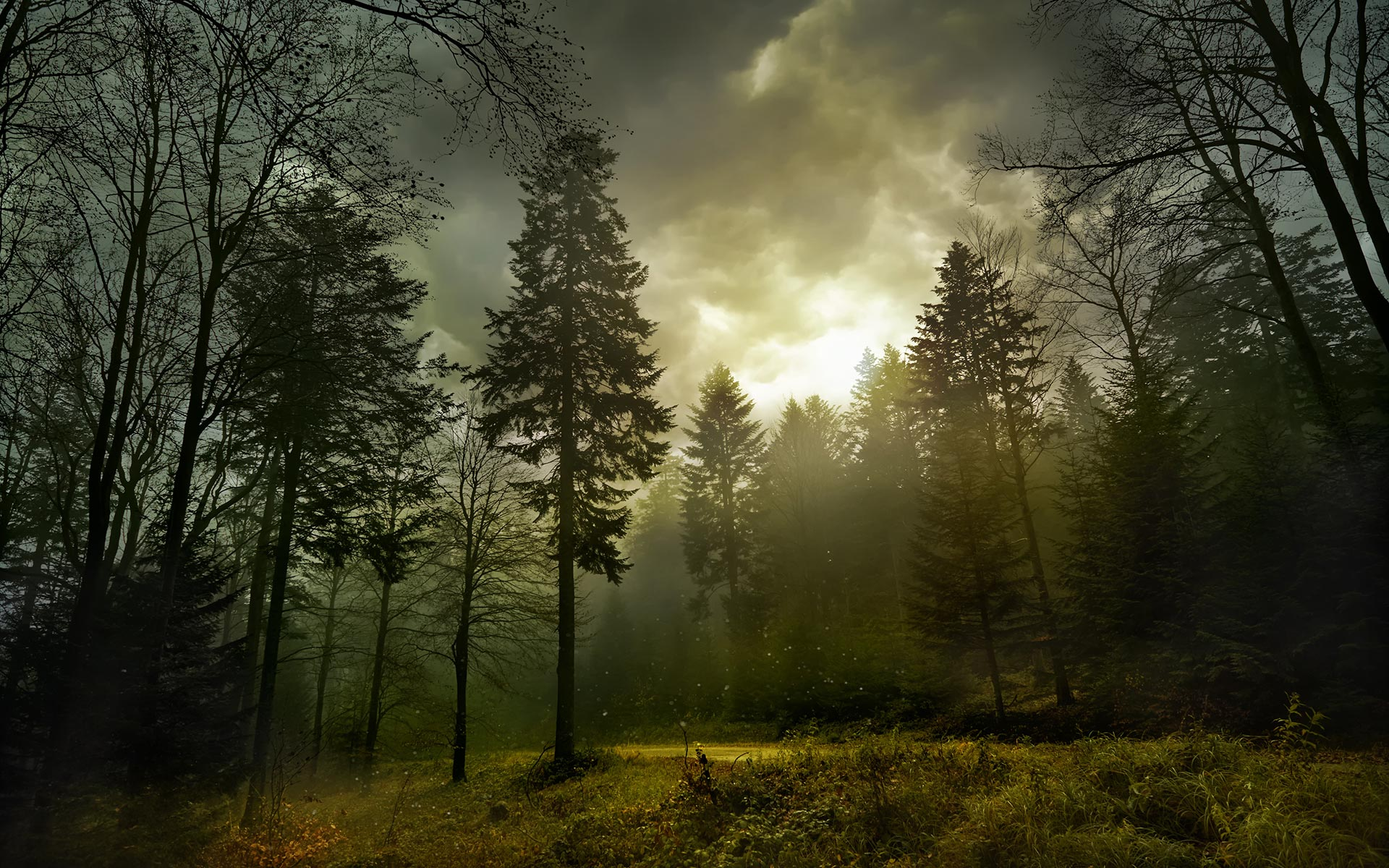 Forest HD Wallpapers 22