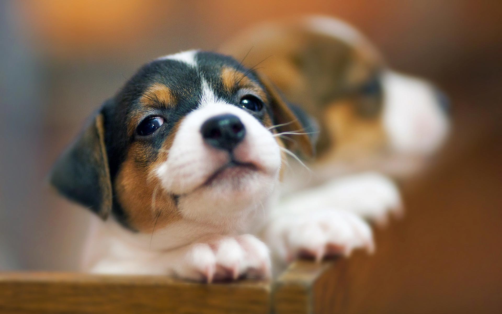 Puppies HD Wallpapers 20