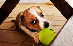 Puppies HD Wallpapers 2