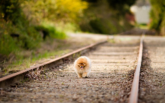 Puppies HD Wallpapers 3