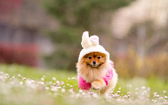 Puppies HD Wallpapers 6