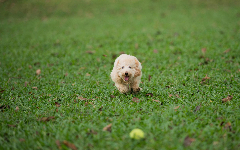 Puppies HD Wallpapers 17