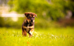 Puppies HD Wallpapers 19