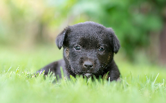 Puppies HD Wallpapers 22