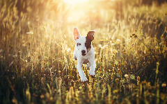 Puppies HD Wallpapers 25