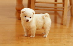 Puppies HD Wallpapers 27