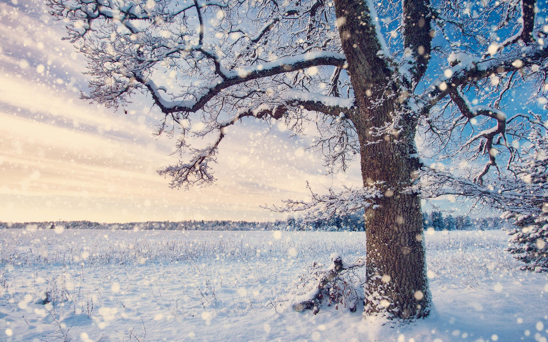 Snow HD Wallpapers 21